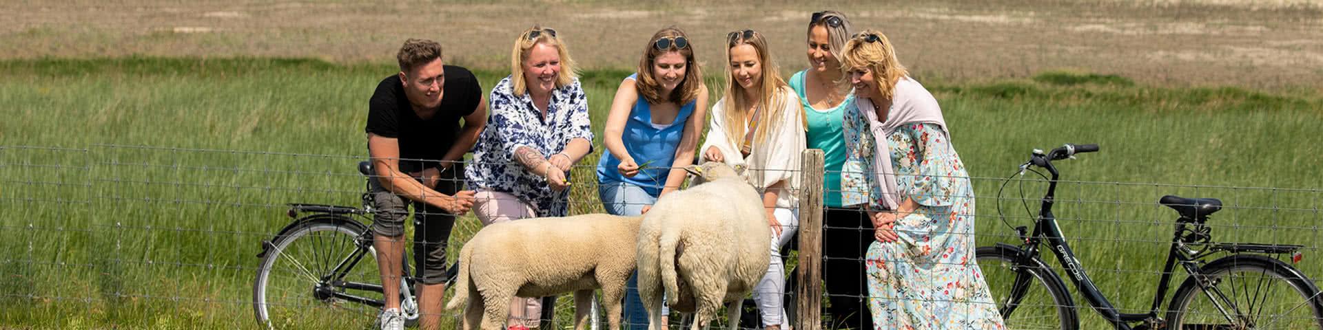 Eine Gruppe von 6 Personen steht am Deich un d füttert zwei Schafe