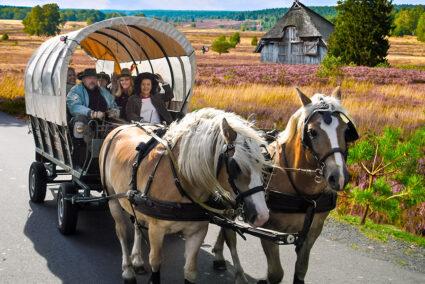Planwagenfahrt durch die Heide in Soltau