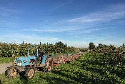 Trecker auf einer Apfelplantage im alten Land