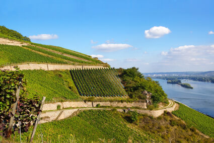 Weinberge am Rhein